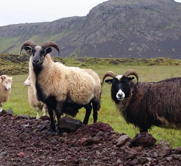 Iceland Stopover Tour
